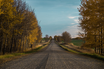 Tree lined rural dirt road in Autumn
