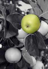 Grüner Apfel zwischen grau