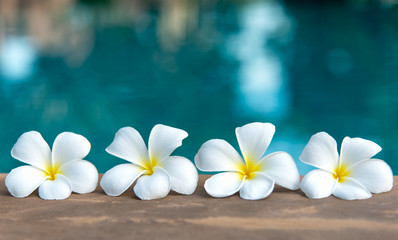 Photo sur Plexiglas Frangipanni Tropical frangipani white flower near the swimming pool, flower spa. Copy space.
