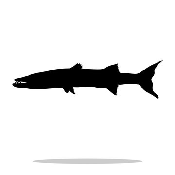 Barracuda fish black silhouette aquatic animal