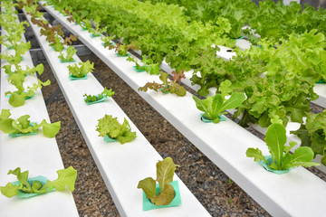 Planting vegetables without soil
