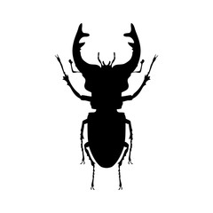 Stag beetle insect black silhouette animal