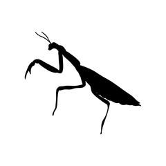 Praying mantis insect black silhouette animal