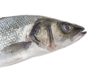 close up Fresh fish mullet half lenght isolated on white background