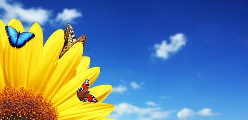 Wunderschöne Sonnenblume mit Schmetterlingen