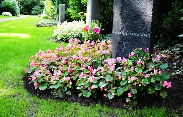 Grabstein und Grabbepflanzung (Begonien) im Sommer