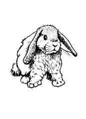 Graphical sketch of rabbit on white for coloring.Domestic animal