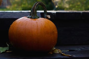 pumpkin on a porch after fall rain