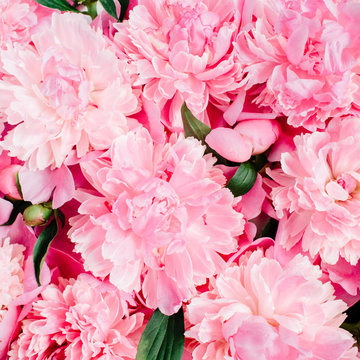 Close-up of pink peony flowers. Valentine's day or Mother's day background. Flat lay, top view flower texture.