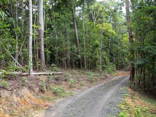 Gravel road in rainforest