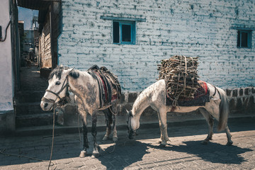 Rural scene with some donkeys in front of a house in the remote village San Juan La Laguna in Guatemala.