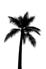 coconut tree or palm tree silhouette black on white