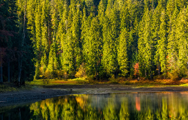 spruce forest with lake at sunrise
