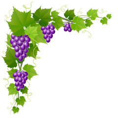 Purple grape corner decoration with leaves, realistic vector illustration, isolated on white, for harvest and autumn design