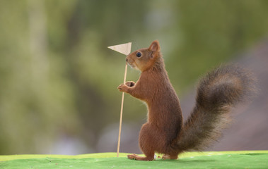 squirrel holds a Golf Flag
