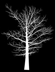 white bare large tree silhouette on black