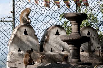 Monkeys in the Golden Temple of Dambulla Sri Lanka