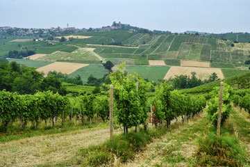 Papiers peints Vignoble Oltrepo Piacentino (Italy), rural landscape at summer