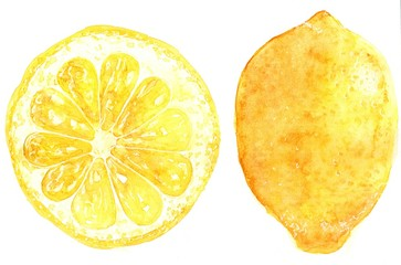 Illustration of fruit lemon. Hand drawn watercolor painting on white background