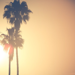 Palm Trees in Golden Sunset With Copy Space