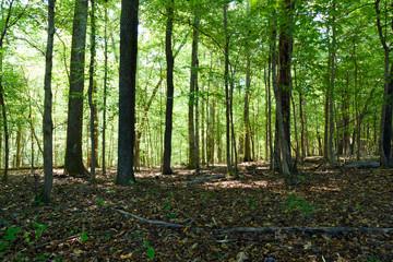 Shady Woodlands