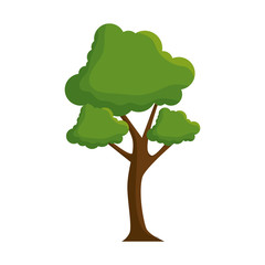 tree icon over white background vector illustration