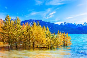 Aspen groves