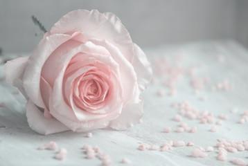 Rose, romantisch