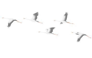 Flying Stork Flock