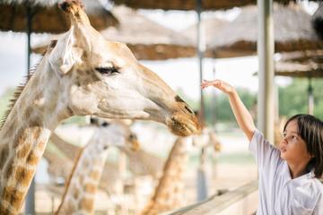 Asian boy making friend with the giraffe