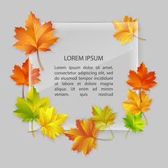 Vector glass banner with colorful autumn maple leaves