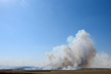 Big fire in the forest and in the field, thick smoke high in the sky
