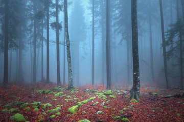 Wall Mural - Autumn season foggy colorful tree forest landscape with mossy rock on the ground.