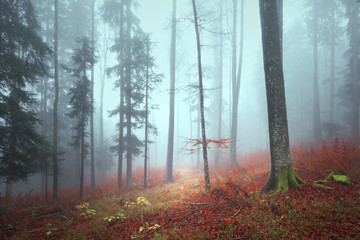 Wall Mural - Fantasy foggy autumn season forest landscape with lovely grassy path.