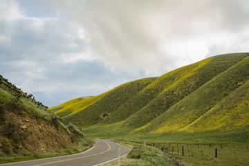 Beautiful yellow goldifelds blossom with a road
