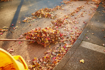 a pile of leaves being raked