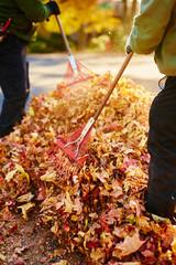 two men raking leaves in a pile