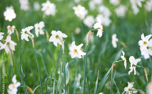 White meadow flowers stock photo and royalty free images on fotolia white meadow flowers mightylinksfo