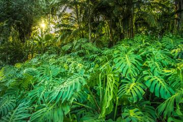 jungle landscape with soft serene light.