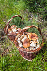 Still life with two wicker baskets of mushrooms