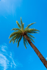 palm tree against the blue sky