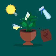 Vector houseplant growth and care infographics. Illustration with sun and plant .Flat style.