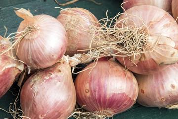 Oignons rosés de Roscoff - Allium cepa - sur fond sombre