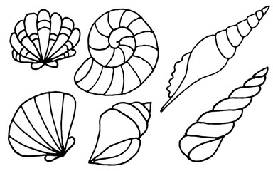 Hand drawn sea shells collection. Marine illustration for coloring books