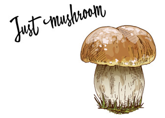 Mushroom orange cap boletus isolated on white background. Vector