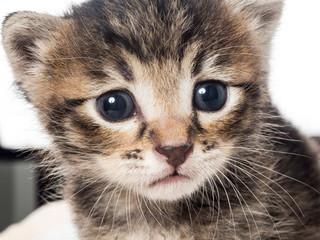 Little baby kitten over soft towel in vet cabbinet