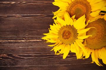 Sunflowers on wooden background. Autumn background