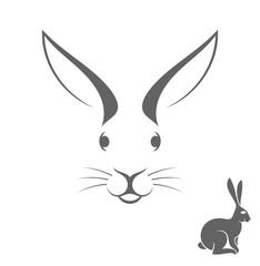 Rabbit. Isolated animals on white background