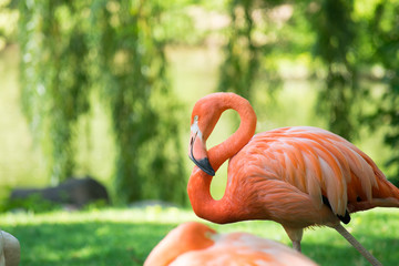Watching Flamingo