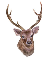 Deer with horns isolated on white background. Illustration, watercolor